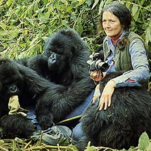 Dian et les gorilles