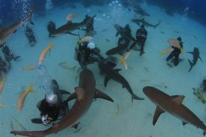 groupe plongeurs requins