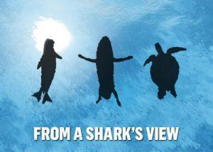 requin vue des proies