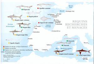 requins menacés
